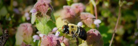 bumble-bee-2180139_640